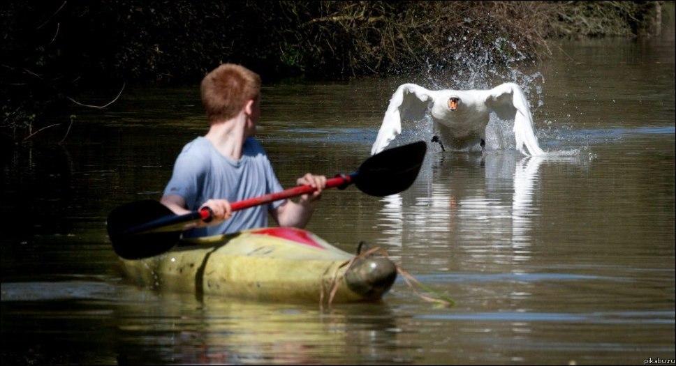 принцесса на лодке лебеде