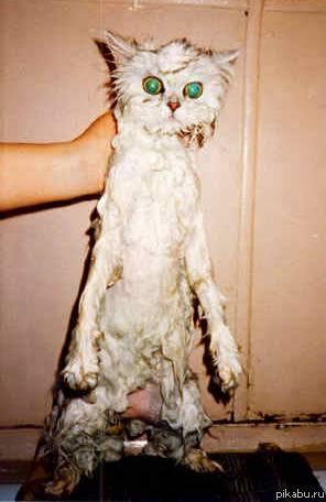Все о кошках Полная информация