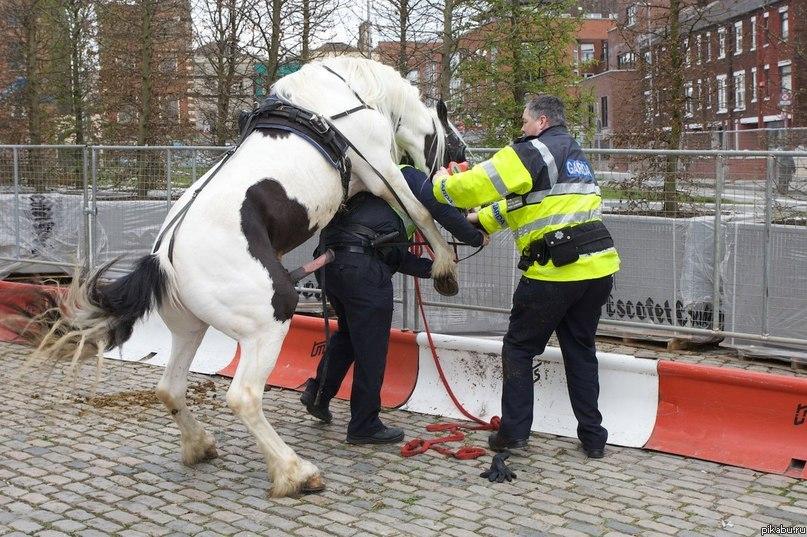 F*ck the police! :D Юмор.