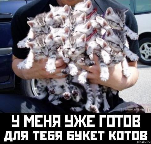 Как похудеть кошку?: ru_cats