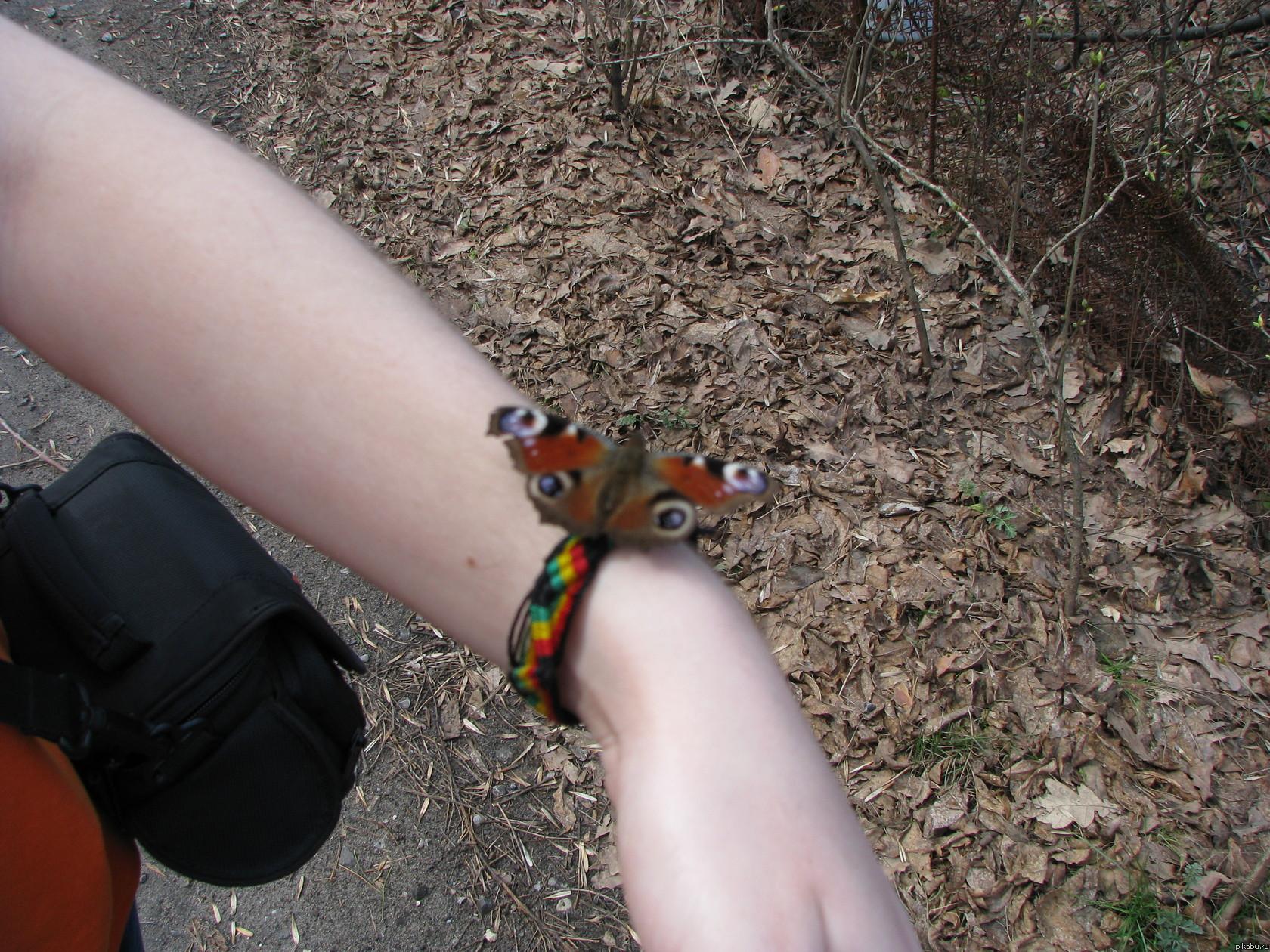 Вот такая дружелюбная бабочка