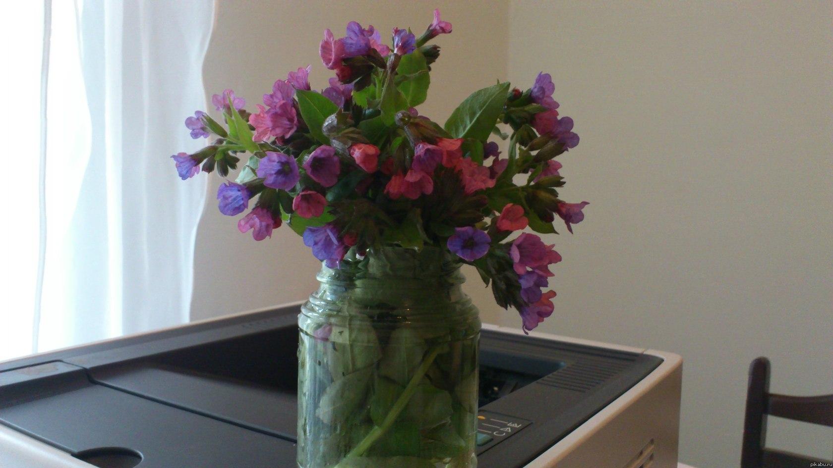Картинки цветка иван да марья 2