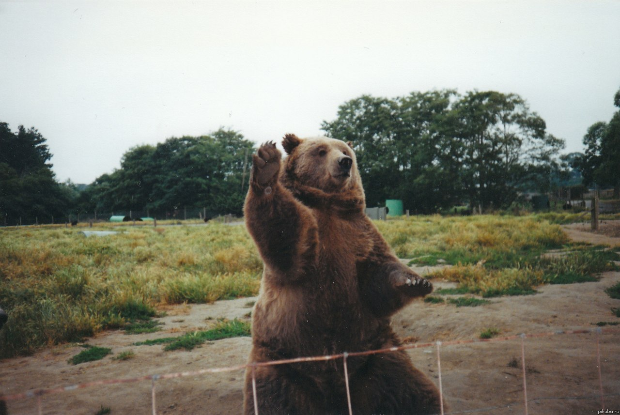 Медведи, картинки и аватары с медведями - Картинки на аву