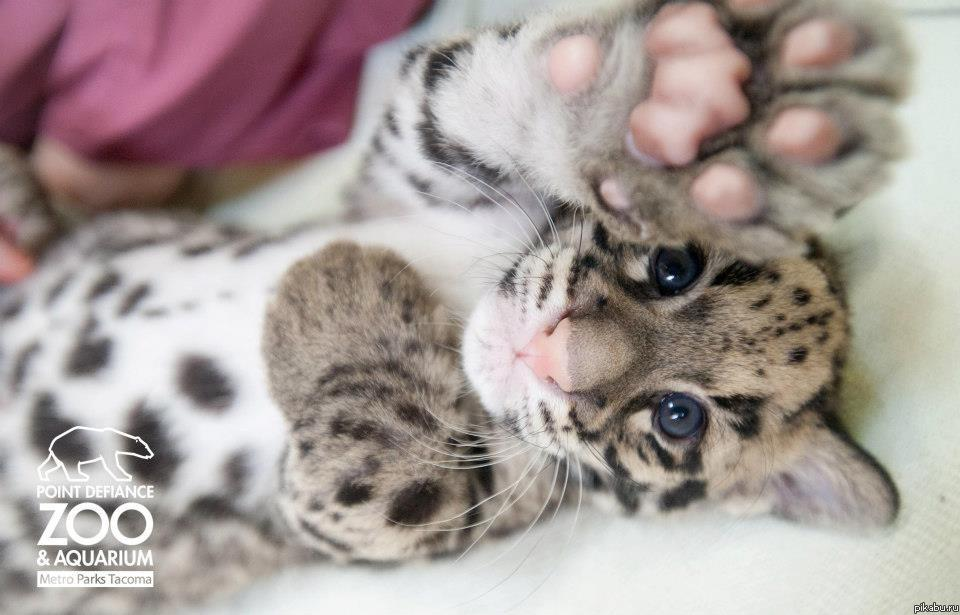 Няшные леопардики
