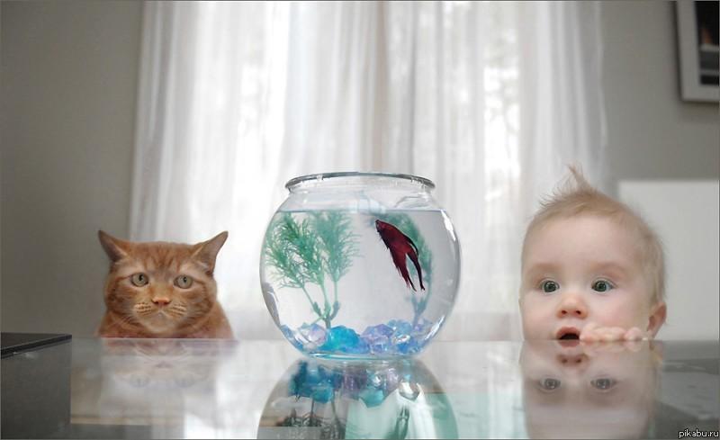 смешные фото детей с животными