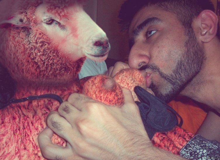 Секс с овцечкой 10 фотография