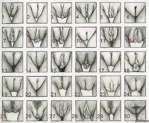 kakie-bivayut-vidi-orgazma