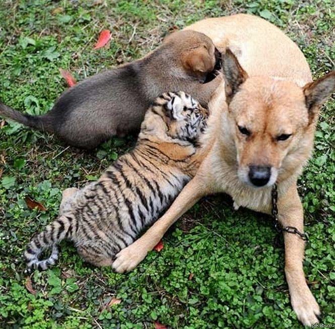 фото разных животных и их детенышей