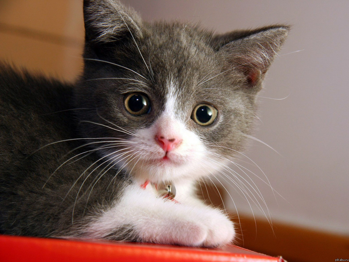 sounds to comfort kittens meowing