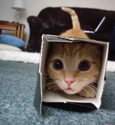 """Кот в коробке """"Я в домике"""""""
