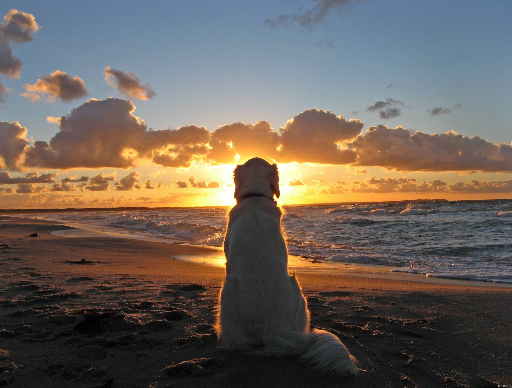 3733 Dog HD Wallpapers  Background Images  Wallpaper Abyss