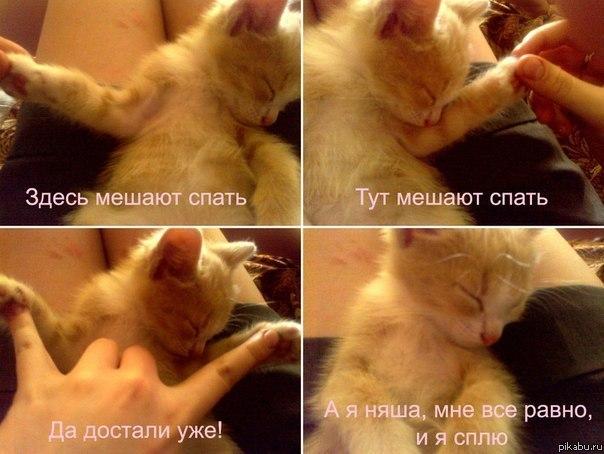 devki-sobirayutsya-spat-foto
