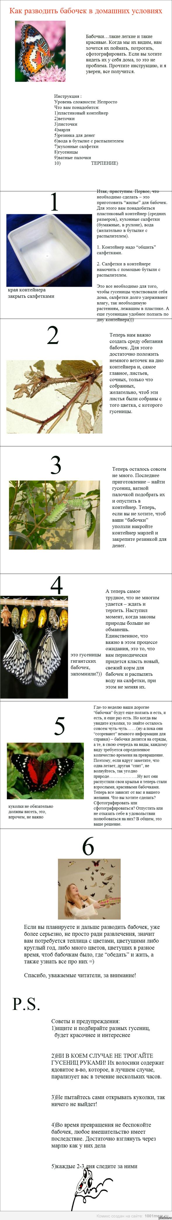 Бабочки разведение в домашних условиях 137