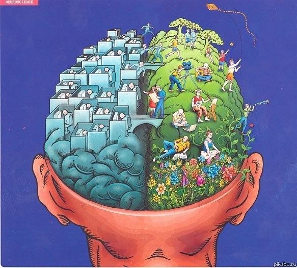 Мозг как две половинки грецкого ореха