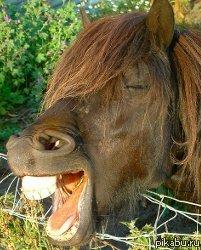 ржет лошадь картинки