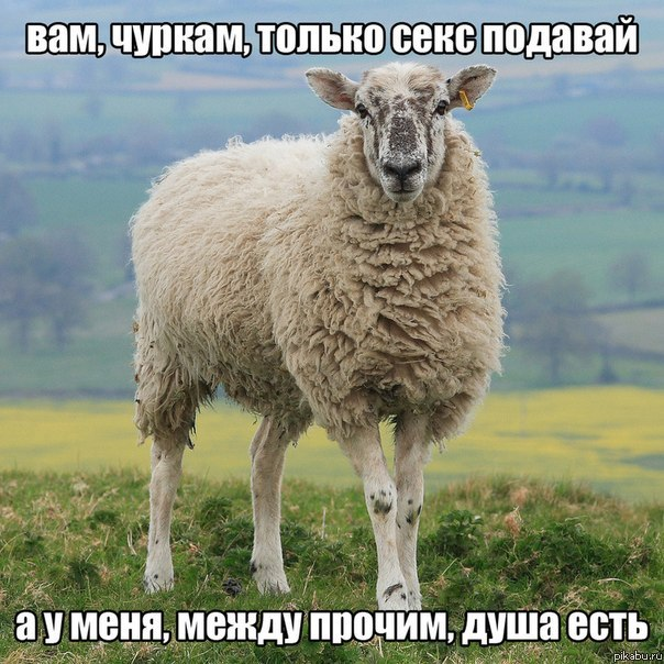 Секс осла и овцы фото