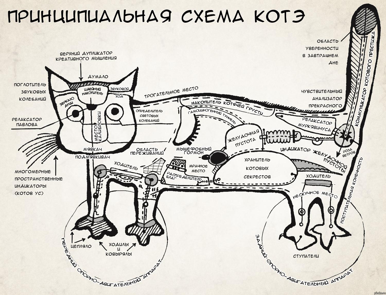 Схема инструкция по коту