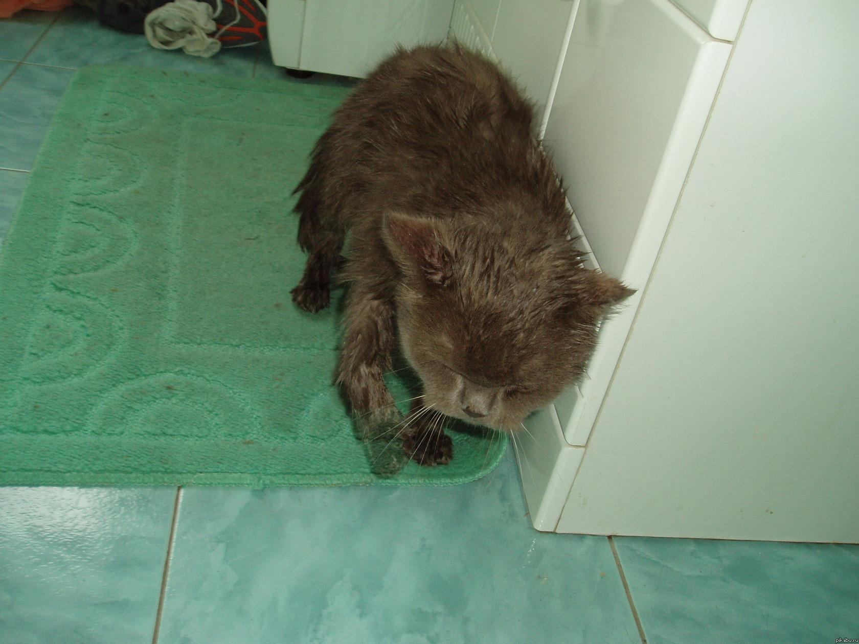 Кот-призрак О_о Как-то решили помыть кота, после того как его помыли и вытерли, решили сфотографировать. Я не знаю как так получилось, что у него на фотографии прозрачная лапа.