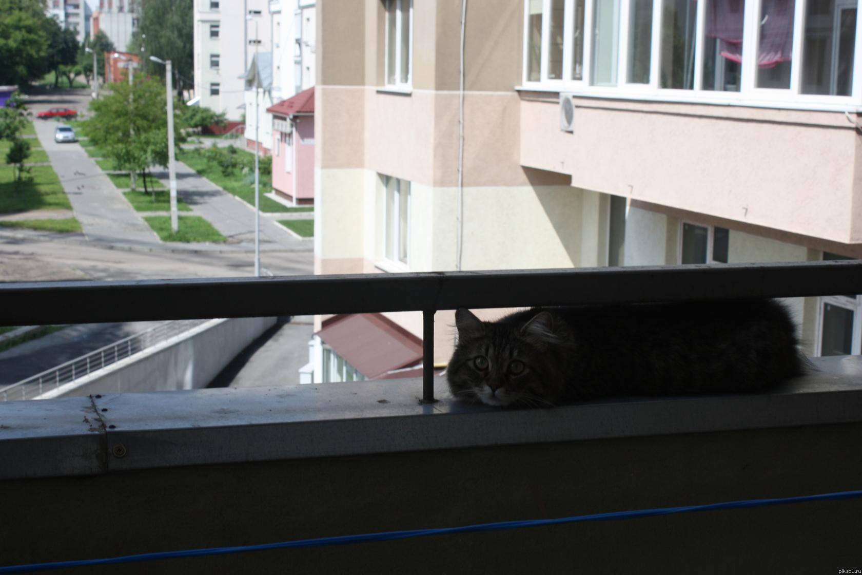 Мяуканье кота