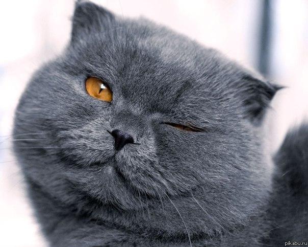фото коты улыбаются