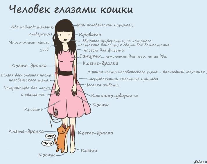 Человек - глазами кошки...
