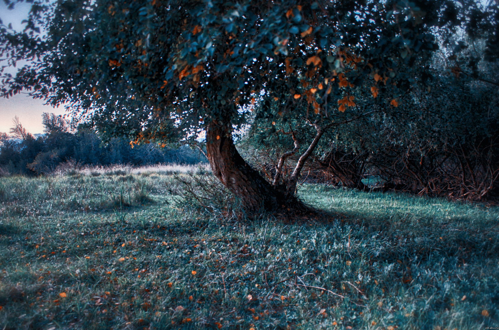 Сказочный лес: pikabu.ru/story/skazochnyiy_les_680710