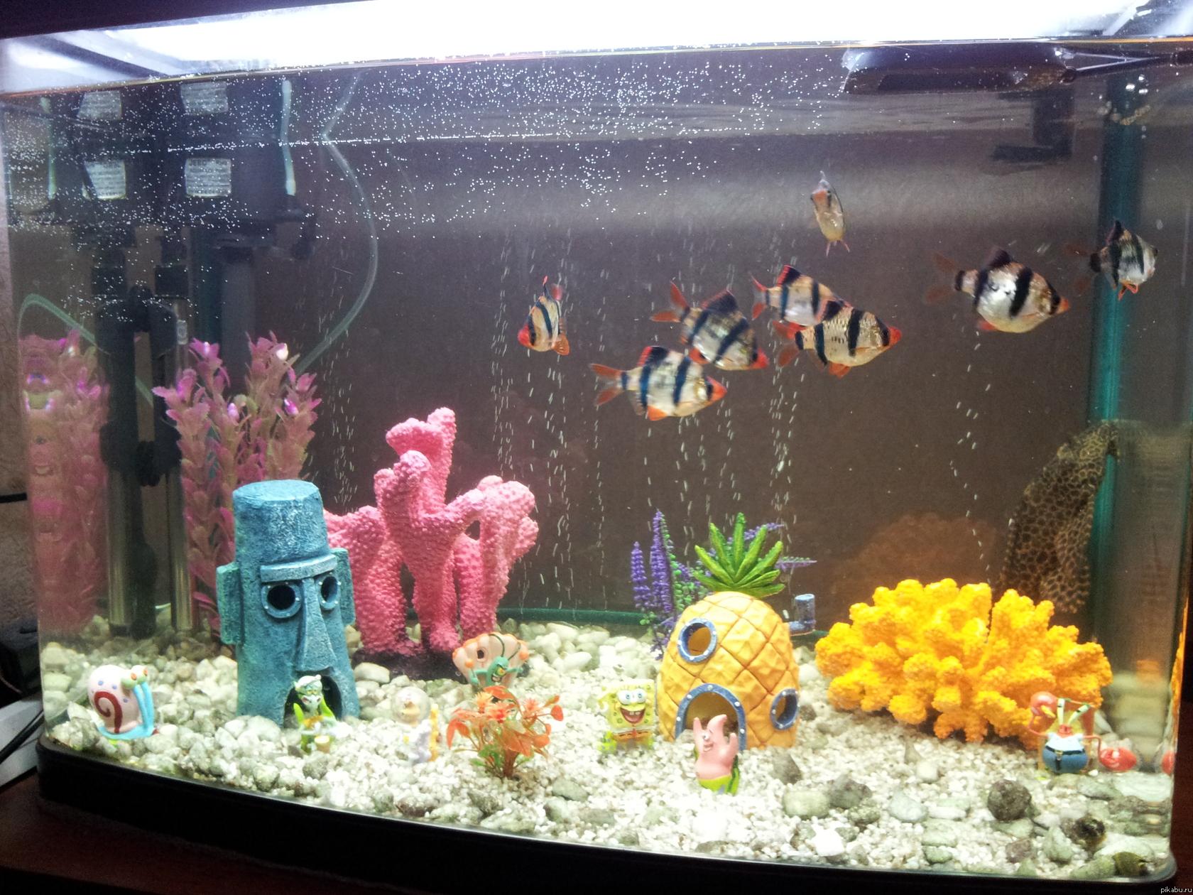 420Декорации аквариума своими руками