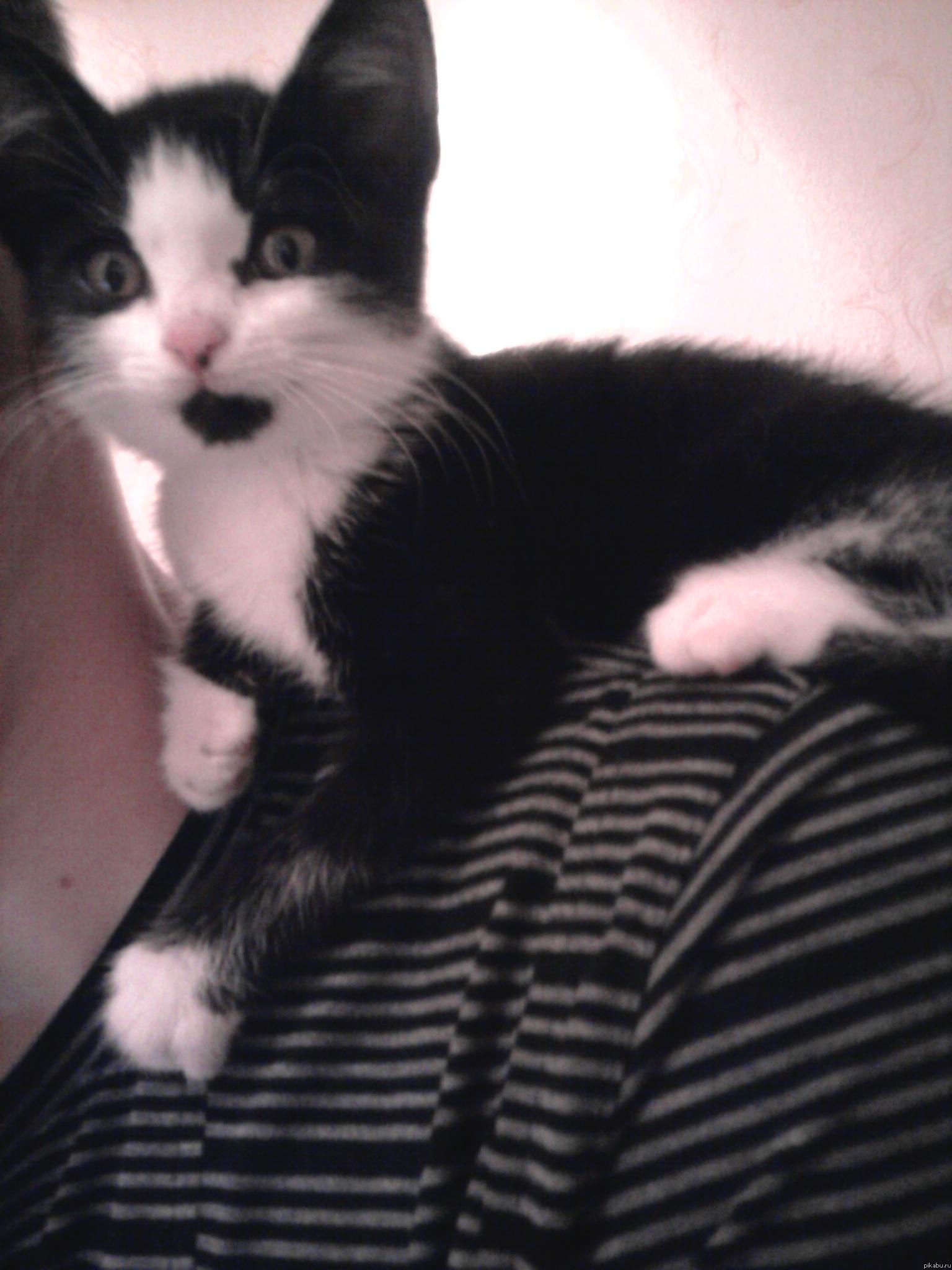 Обещали - сделали Одногруппница обещала завести у меня кота. Итак, знакомьтесь, это Фортран (сокращённо Форт)