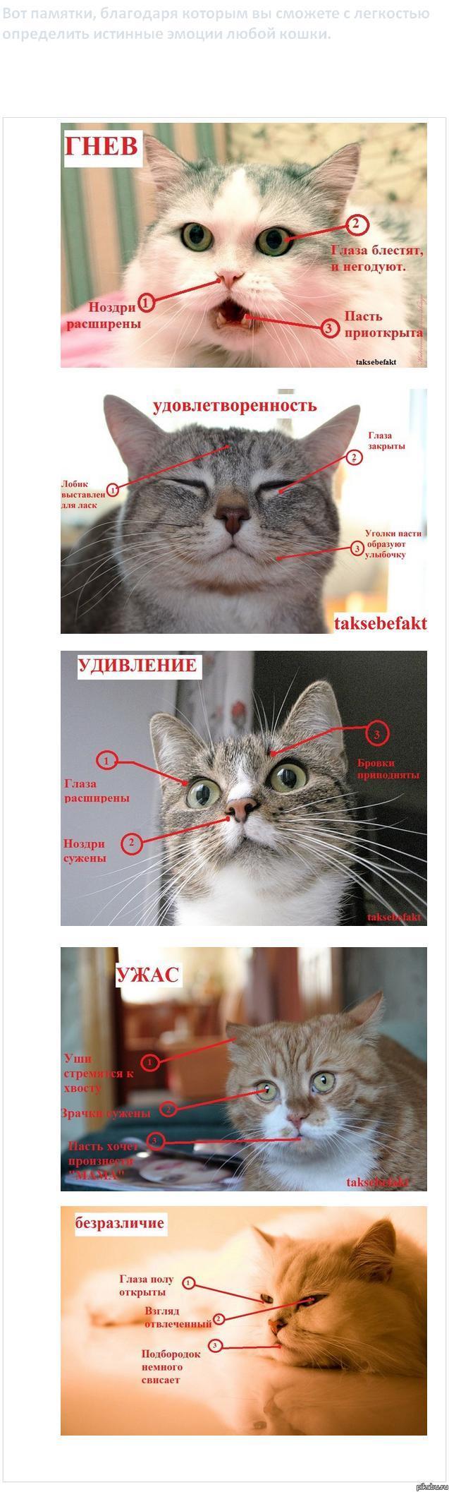 какие чувства есть у кошки этой