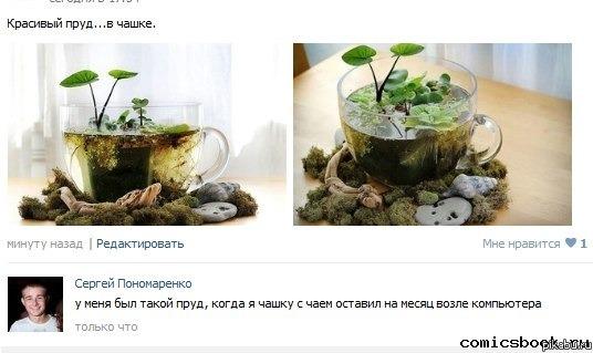 Как сделать пруд в чашке