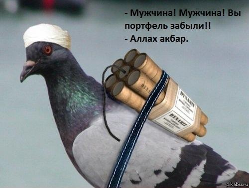 минута черного юмора))