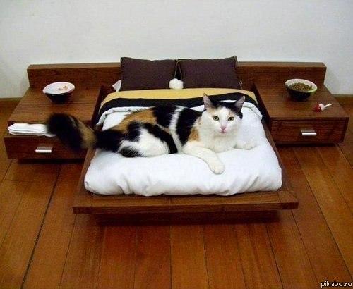 Идеи домика для кошки