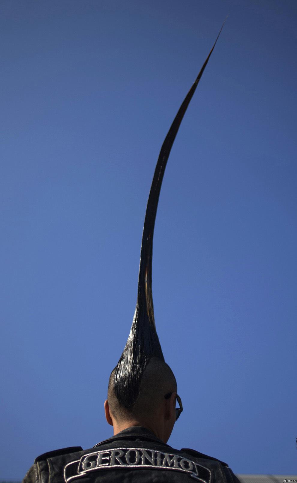 Самая большая ракушка в мире Живая природа