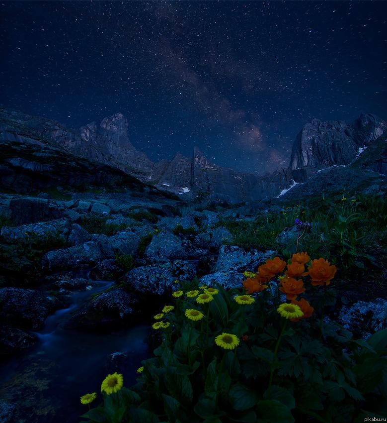 Красивые фото звезды и цветы
