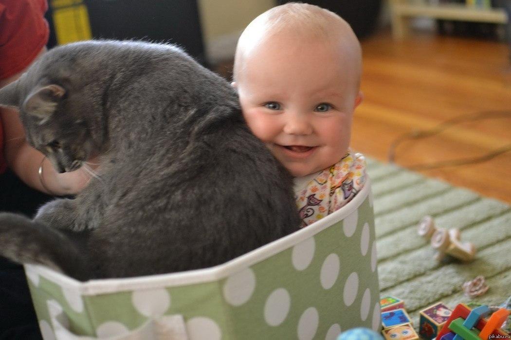 Фото приколы о детях и кошках