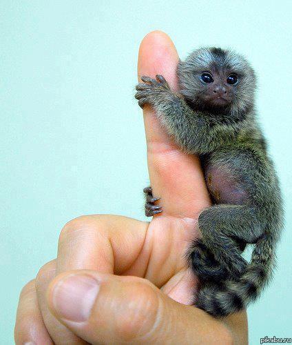 Smallest cute animals