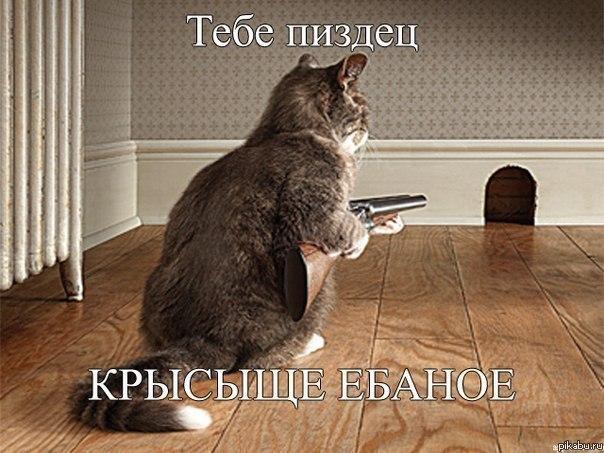Может ли котенок ловить мышей