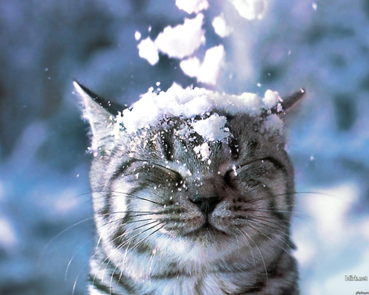 cat cancer