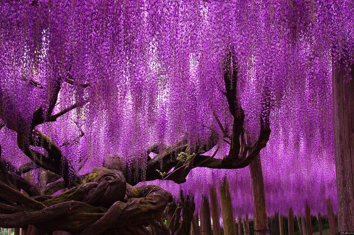 Фото цветов в японии