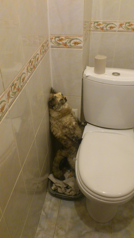 Сестра в туалете фото 4 фотография