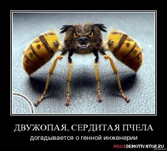 http://apikabu.ru/img_n/2012-11_3/1y6.jpg