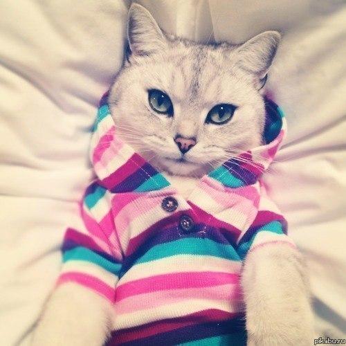 Фото на аву в вк коты крутые