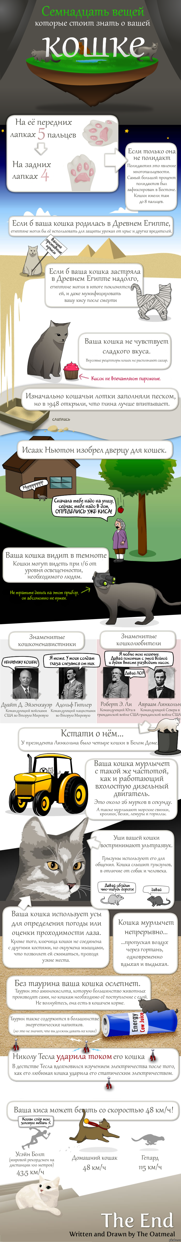 Всё ли вы знаете о вашей кошке? длиннокомикс Картинки и фото