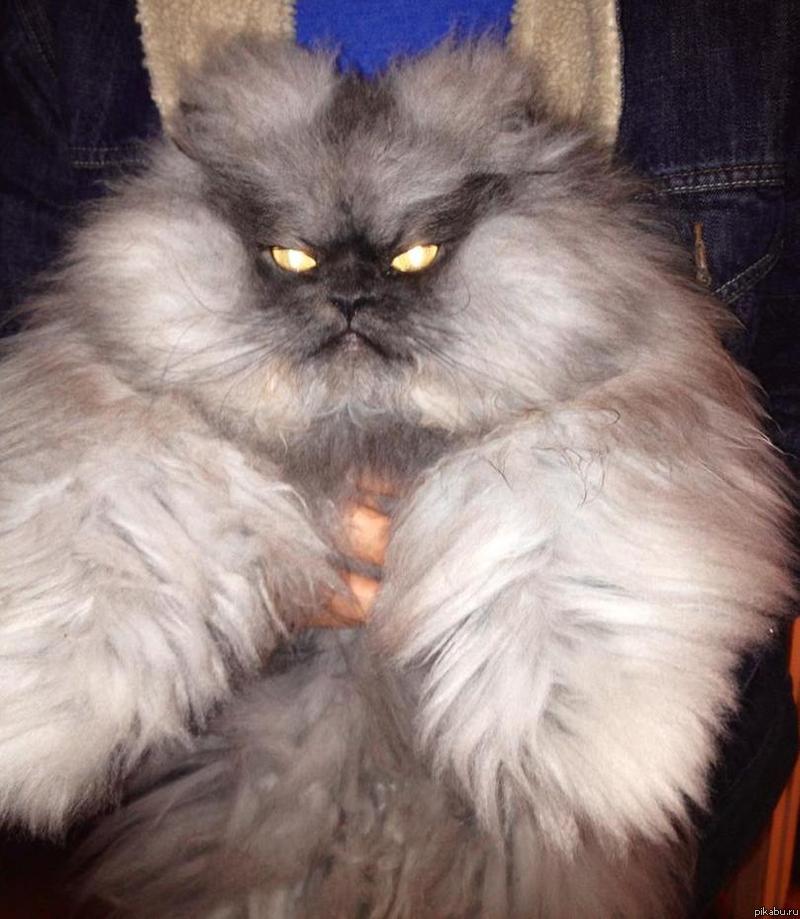 Cat meows at me