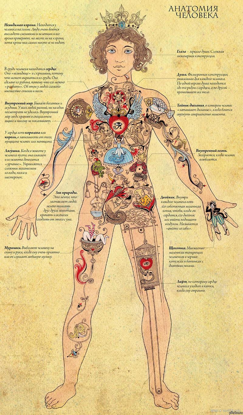 Внутренний мир  человека Интересная картинка анатомии человека