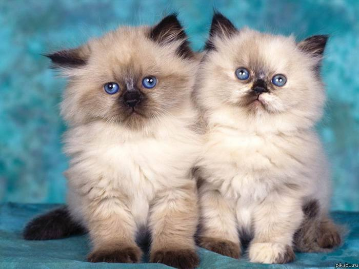 картинки няшек котиков