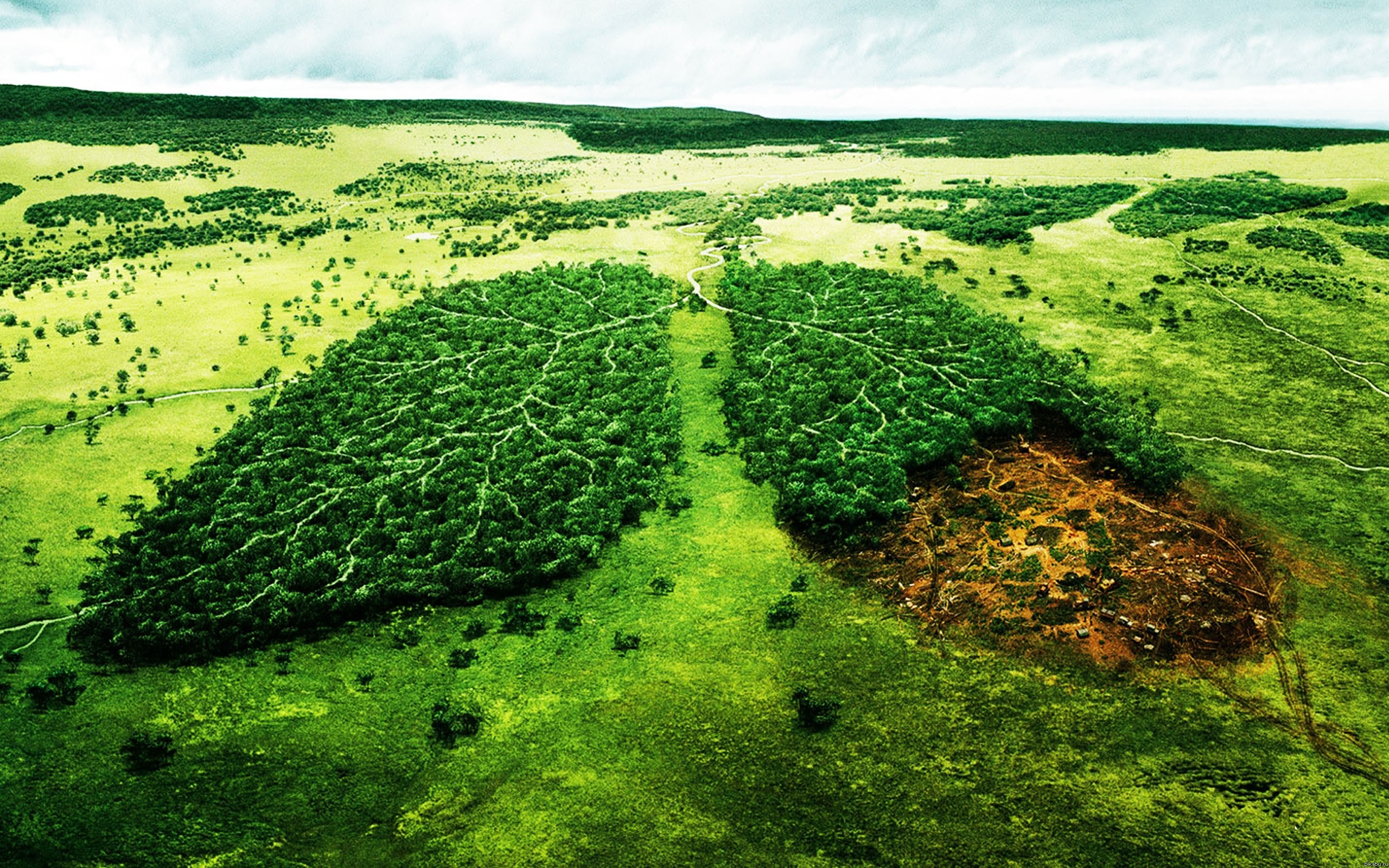 Харьковские леса облысели